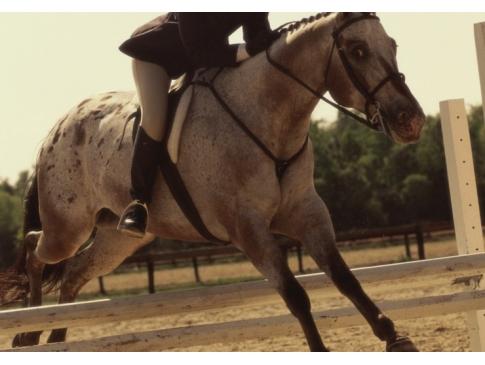 乗馬・馬術|スポーツマウスピース|マウスガード